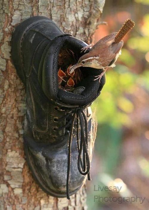 boot-birdhouse-1