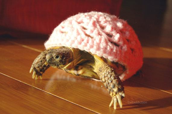 tortoise-cozie-1