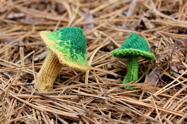 leigh-fungi-3