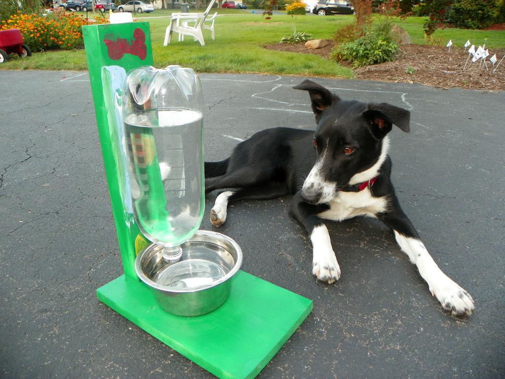 DIY_pet_water_bowl_1