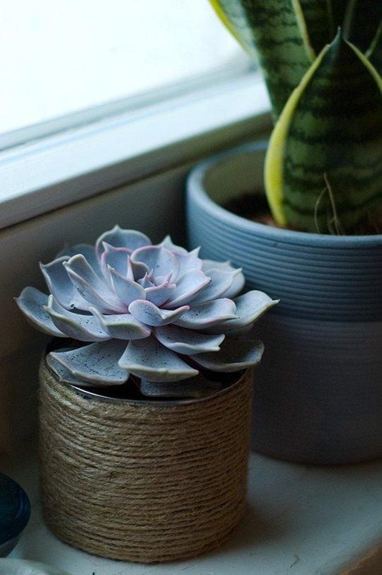 succulent pot diy