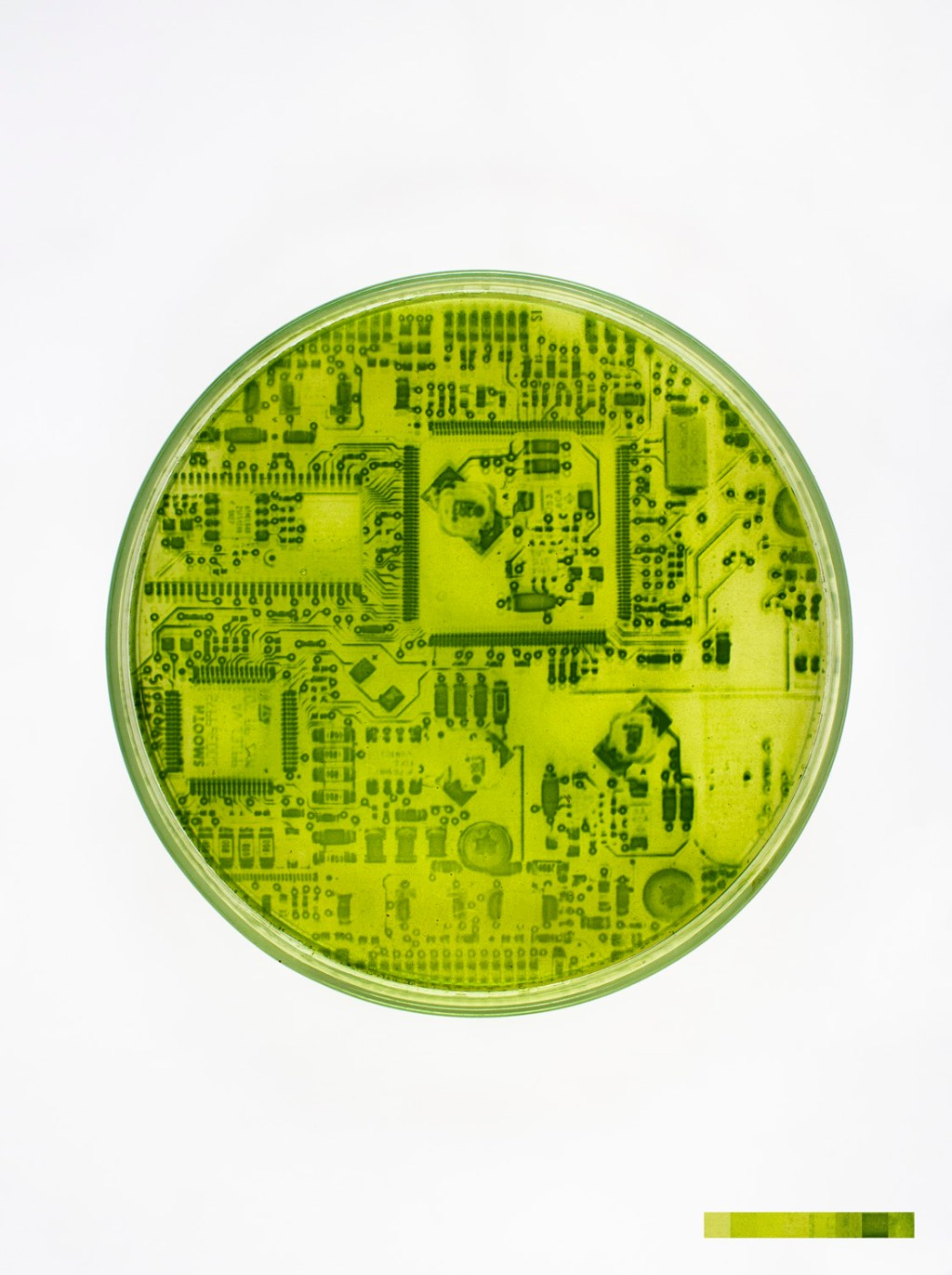 algae-graphs-3