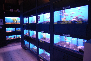 Tropical fish and general information on fish care and breeding