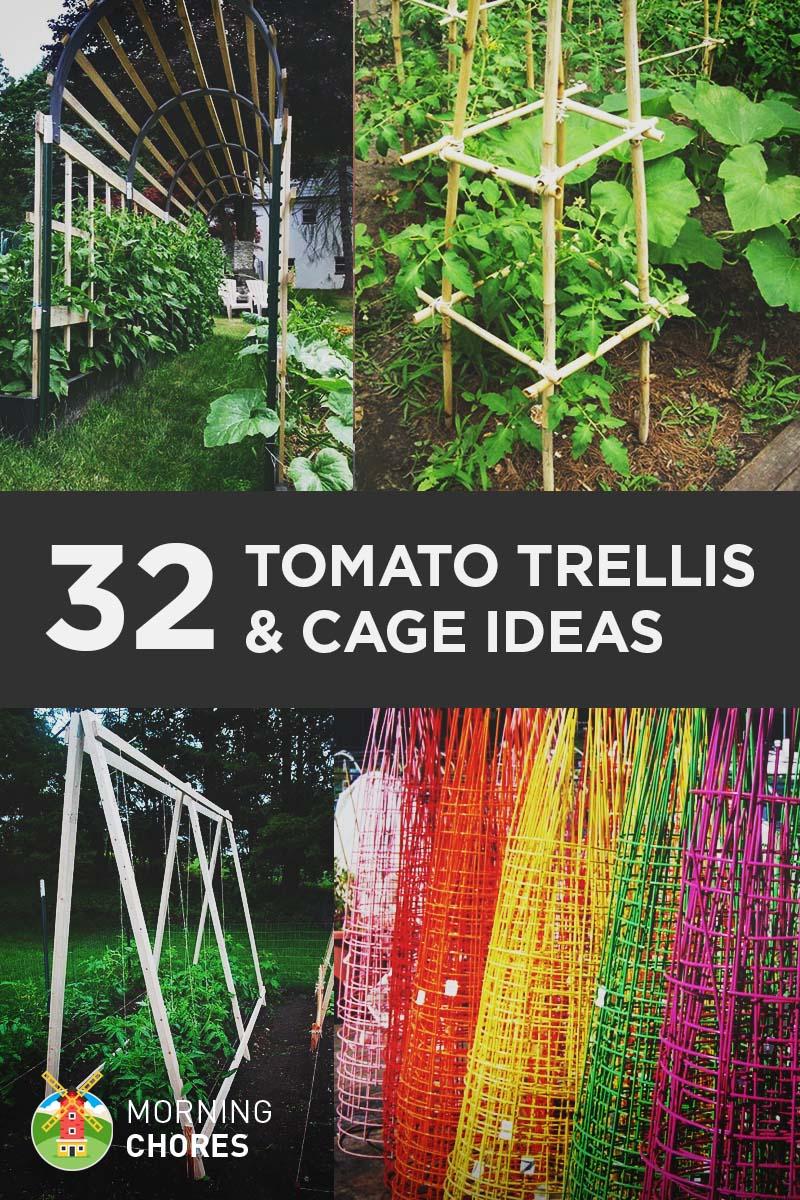 Fullsize Of How Far Apart To Plant Tomatoes