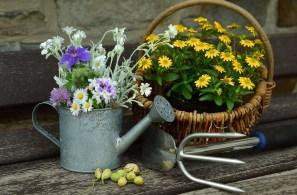 Flowers, Garden, Still Life, Gardening, Watering Can