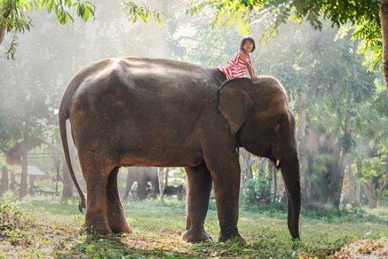 Çocuklar, Afrika, Hayvanlar, Asya