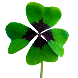Luck Four Leaf Clover Vierblättrig · Free Image on Pixabay