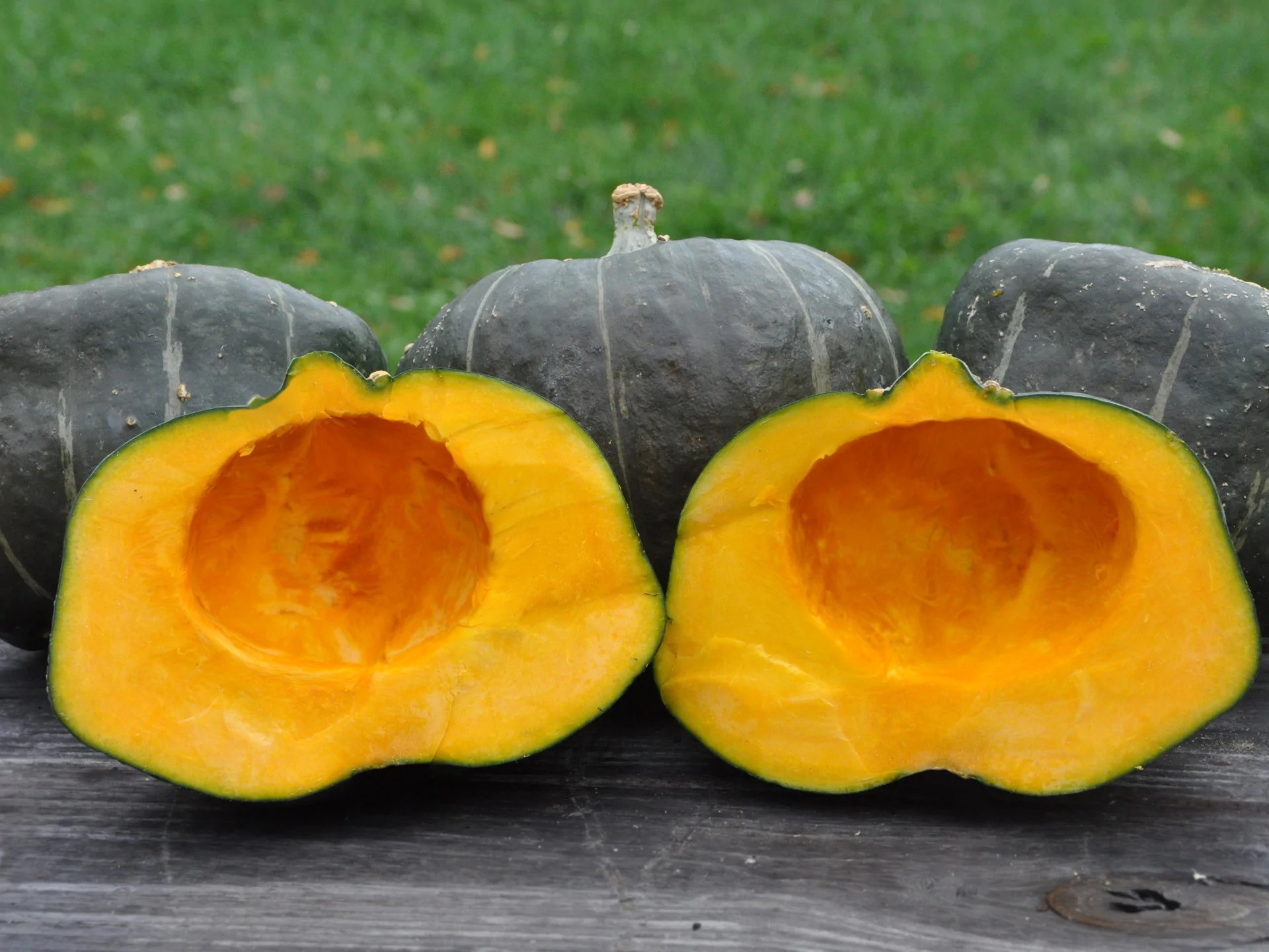 Irresistible Burgess Buttercup Winter Squash Burgess Buttercup Winter Squash Seeds Burgess Seed Plant Co Promo Code Plant Company Phone Number Burgess Seed houzz-03 Burgess Seed And Plant