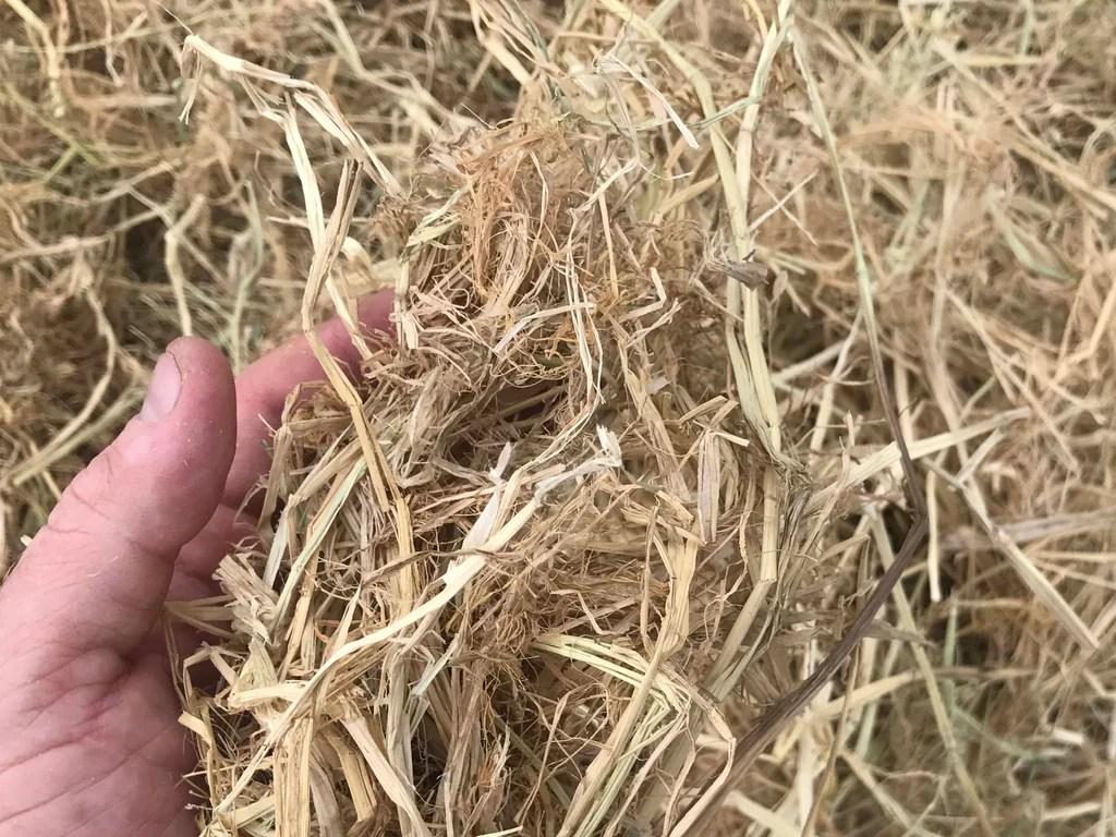 Fullsize Of Straw Vs Hay