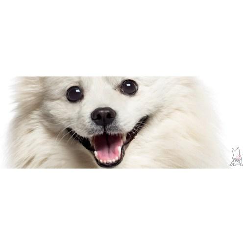 Medium Crop Of Dog Dry Nose
