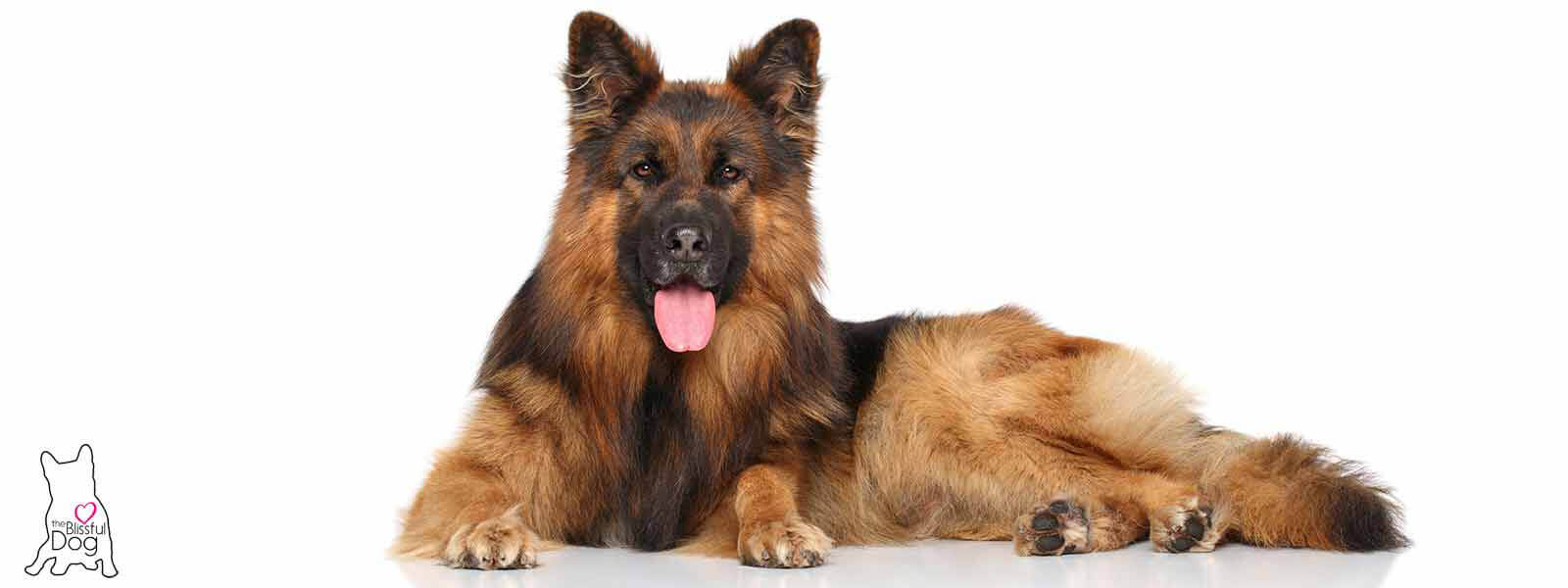 Cute Puppies Does Your German Shepherd Have A Dry Or Even Cracked German Shepherd Nose Your Rough Nose German Shepherd S Cartoon German Shepherd S bark post German Shepherd Pictures