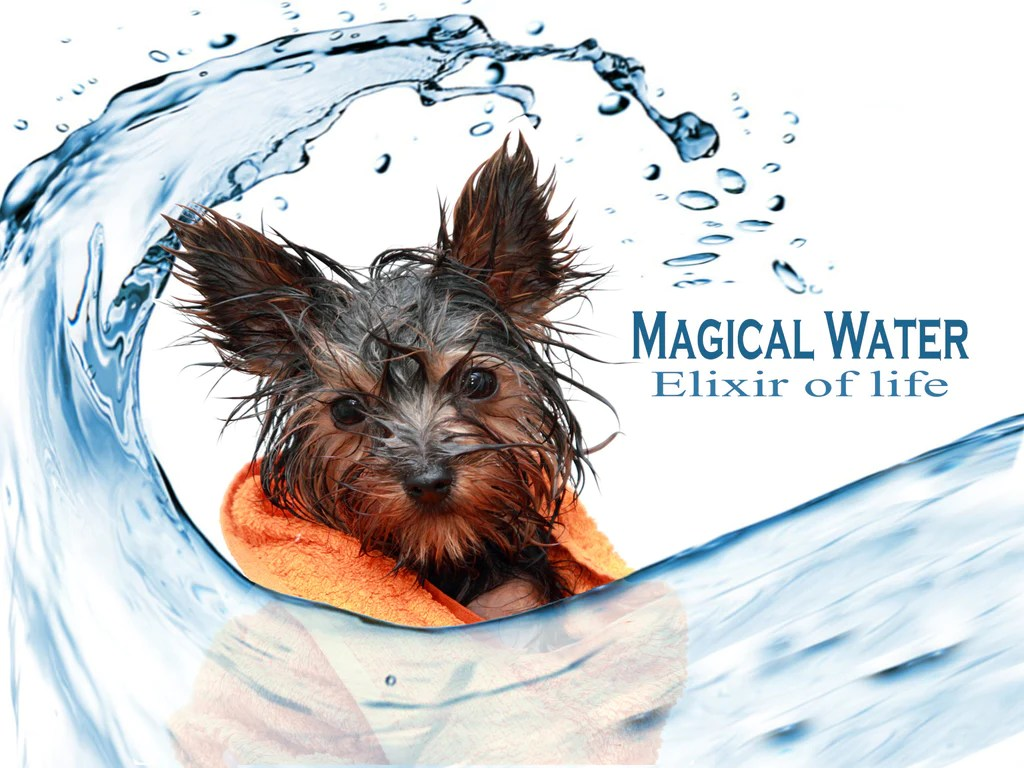 Teal Dogs My Dog Wont Drink Tips Tohelp Magical Water Elixir Magical Water Water Requirements Life Reasons Your Dog Need Water Dog Wont Drink Water When Hot Dog Wont Drink Water On Hot Day bark post Dog Wont Drink Water
