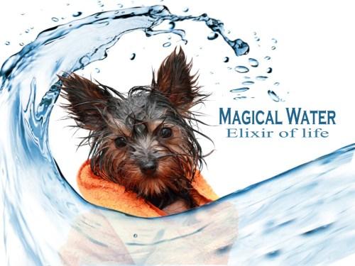 Medium Of Dog Wont Drink Water