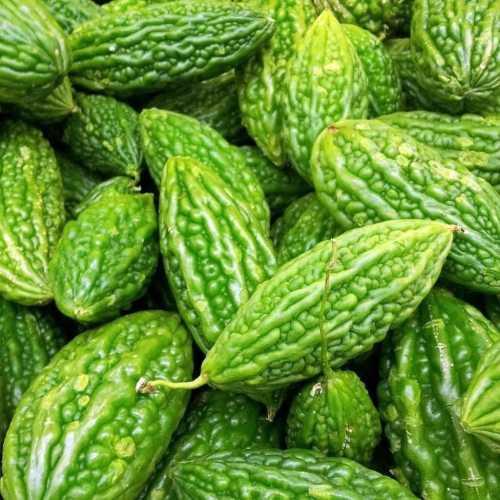 Medium Of Bitter Melon Seeds