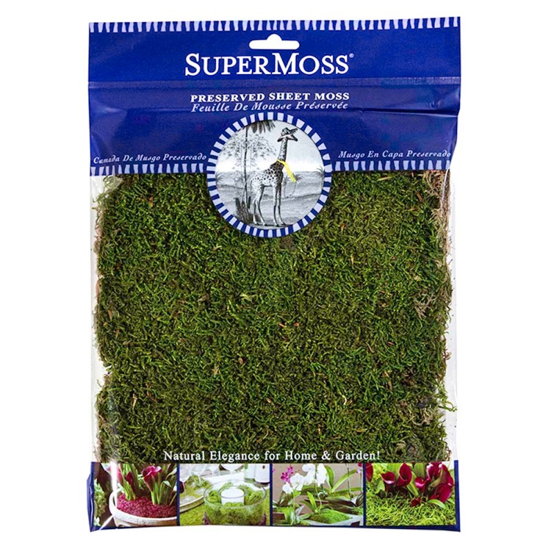 Large Of Canada Green Grass Seed