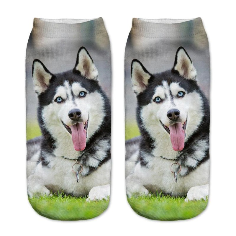 Large Of Husky Pug Mix