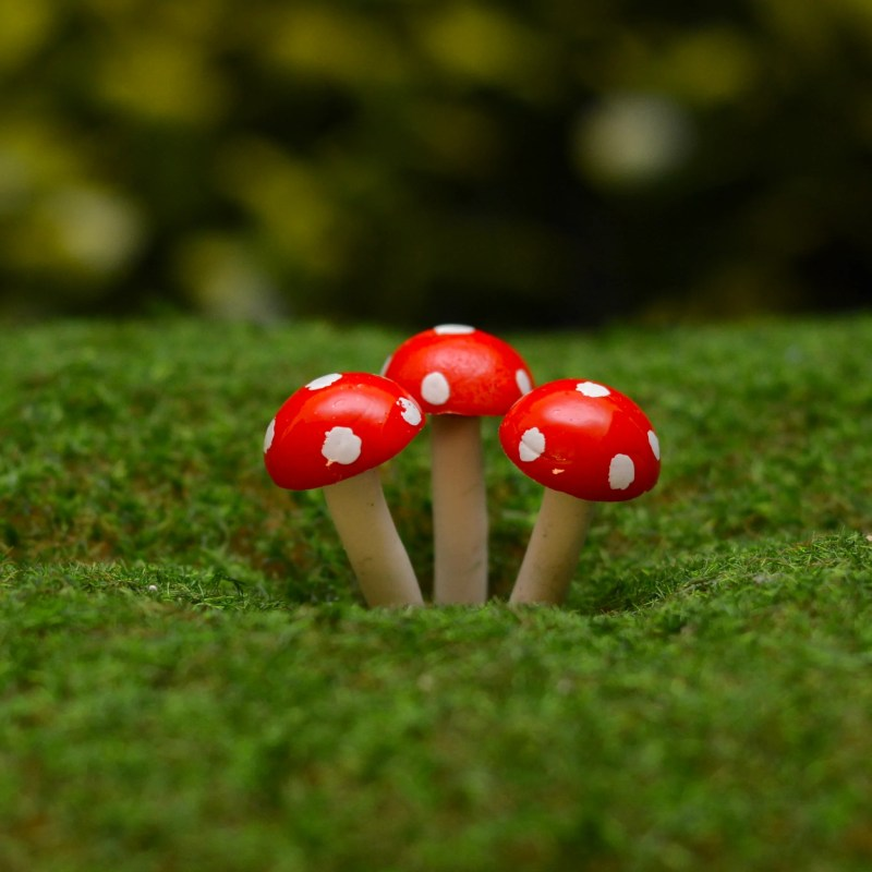 Admirable Fairy Garden Mini Terrarium Mushrooms From Steph Fairy Maker Fairy Garden Mini Terrarium Mushrooms Steph Fairy Maker Mushroom Fairy Garden Mushroom Fairy Garden House