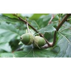 Small Of Dark Oak Sapling Wont Grow