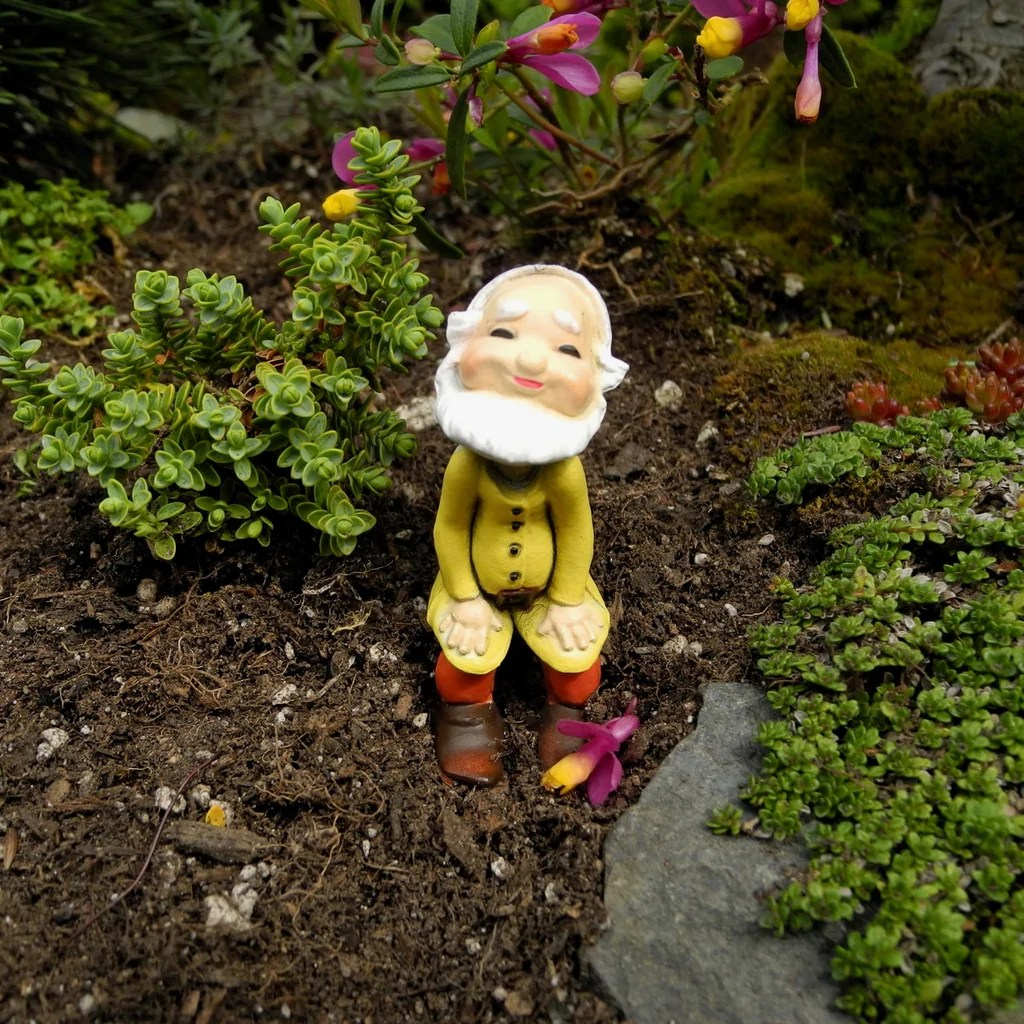 Fullsize Of Mini Gnome Gardens