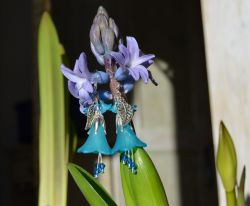 Small Of Blue Bell Flower