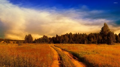 Path on the rusty field towards the forest wallpaper - Nature wallpapers - #54631