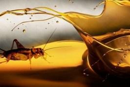Siap-siap Konsumsi Minyak Goreng dari Serangga | Tempo Teknologi