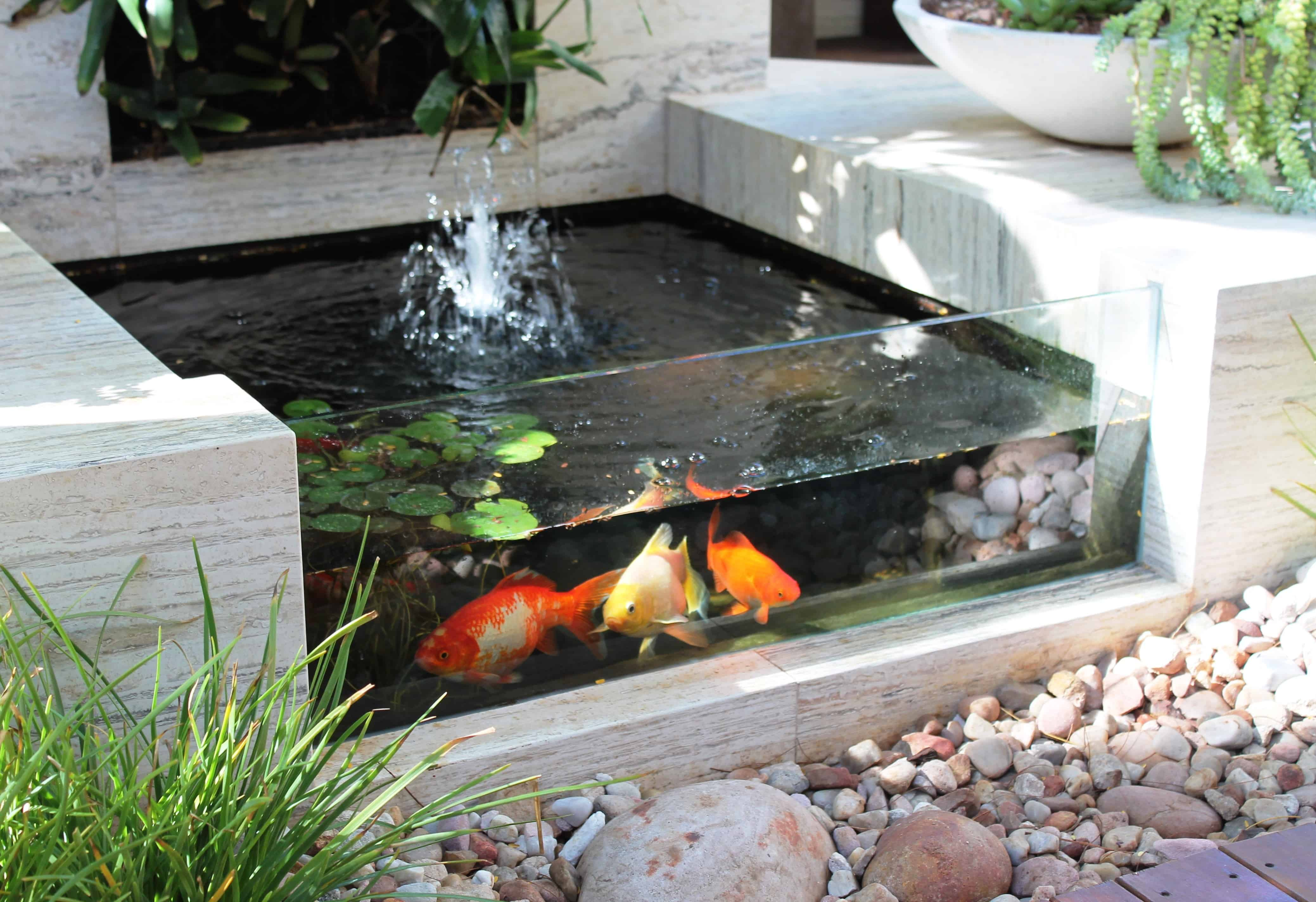 Inspiring Water Garden Ideas Homes Koi Pond This Small Solar Design Gives Everyone A Chance To Be A Pond Sublime Koi Pond Designs Winter Small Koi Pond houzz 01 Indoor Koi Pond