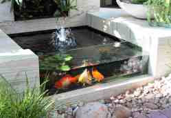 Small Of Indoor Koi Pond