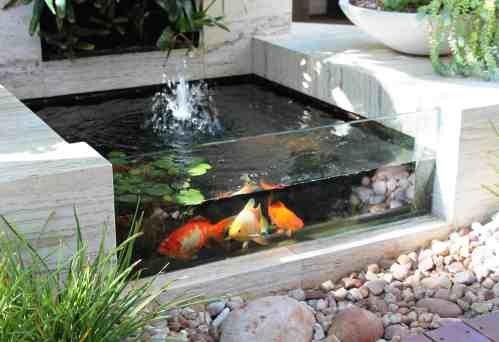 Medium Of Indoor Koi Pond