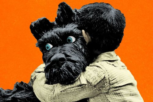 Medium Of Aaron Rodgers Dog