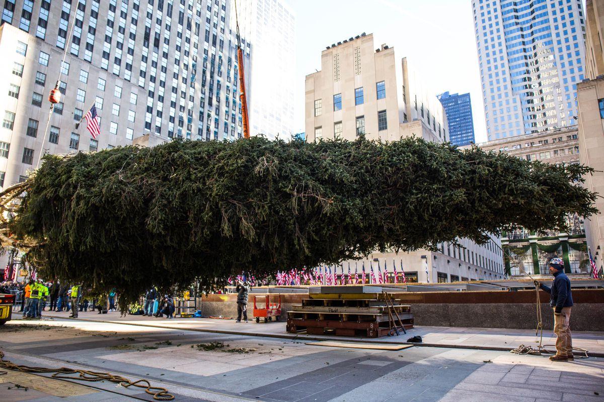 Fullsize Of The Tree Center