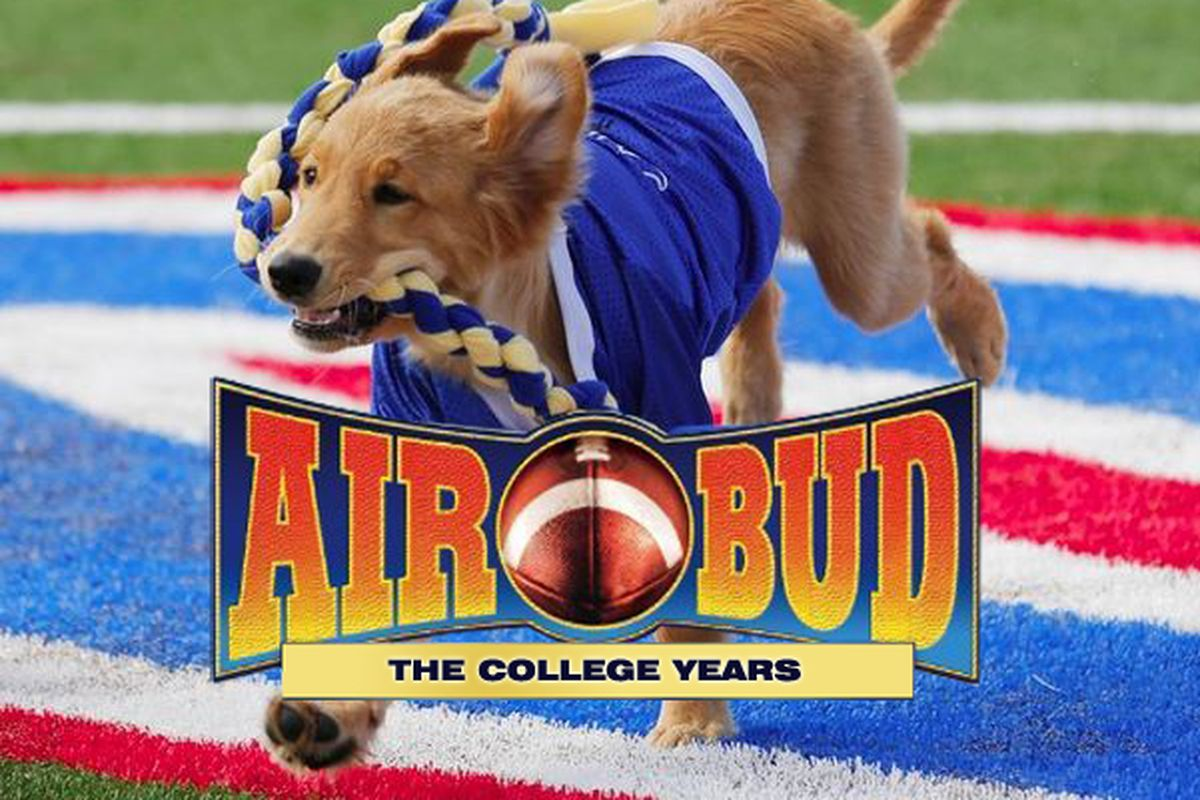 Sunshiny Beginning Probably Familiar Or At Least Aware Air Budseries With Eponymous Air Filmseries Air College Years Every Day Should Be Saturday bark post Air Bud Dog