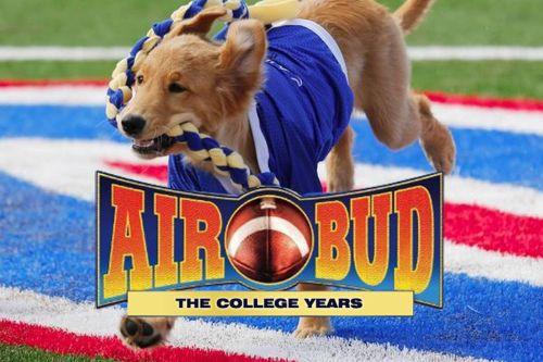 Medium Of Air Bud Dog