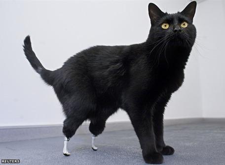 oscar gato bionico Oscar, el gato biónico