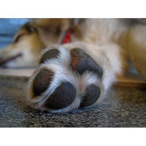 Medium Crop Of Why Does My Dog Lick My Feet