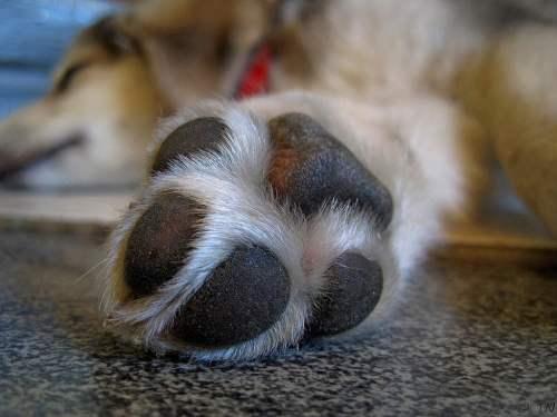 Medium Of Why Does My Dog Lick My Feet