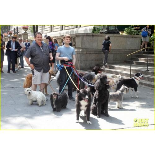 Medium Crop Of Daniel Radcliffe Dogs
