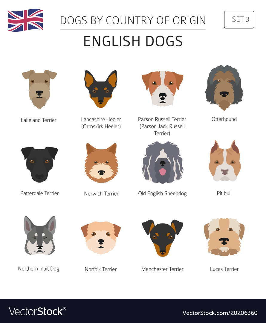 Startling Dogs By Country Origin English Dog Breeds Vector 20206360 English Dog Breed Crossword English Dog Breeds Large bark post English Dog Breeds