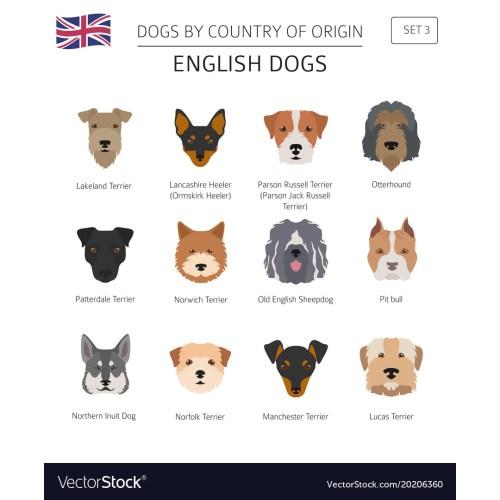 Medium Crop Of English Dog Breeds