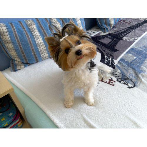 Medium Crop Of Cutest Dog Ever