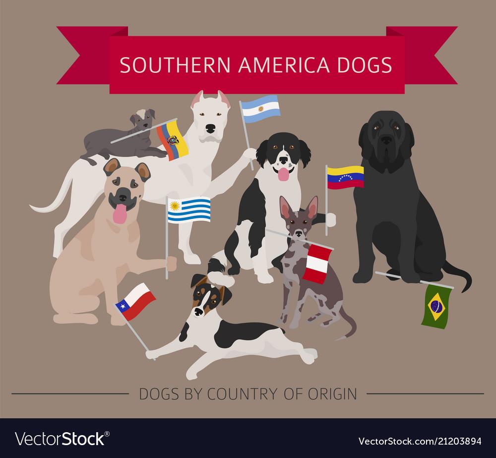 Fullsize Of Dog In Latin