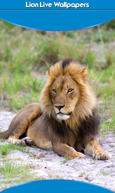 Lion Live Wallpapers | Download APK for Android - Aptoide