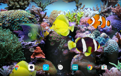 Coral Fish 3D Live Wallpaper | Download APK for Android - Aptoide