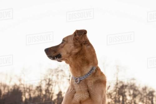Medium Of Dog Standing Up
