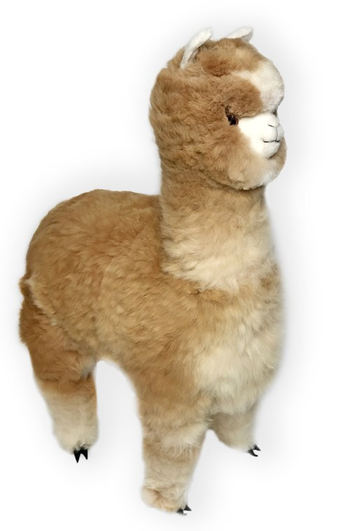 Medium Of Llama Stuffed Animal