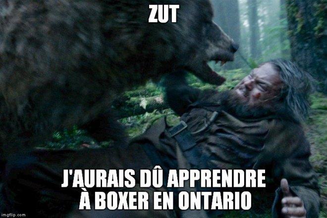 Un Canadien se bat contre un ours et n'écope que de quelques égratignures