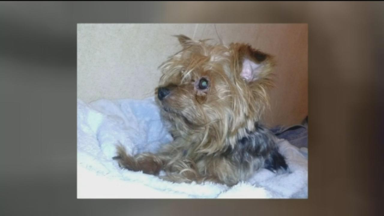 Mesmerizing Dog Stolen From Her Car Craigslist Houston Pets Free Cats Craigslist Houston Pets Dane Woman Searching bark post Houston Craigslist Pets