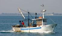 prodotti ittici pesca pesce spada