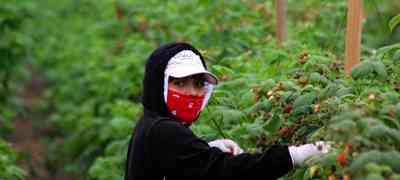 Rape in the fields goes unpunished