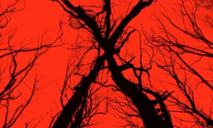 "Upcoming Film ""The Woods"" Is Actually A ""Blair Witch Project"" Sequel!"
